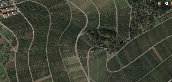 Lentz Beutelsbach vineyards