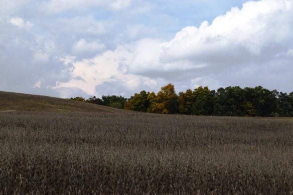 ulrich-fall-field