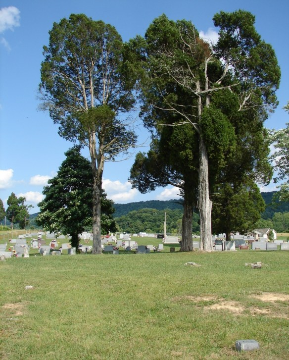 raleigh-kite-cem-old-trees