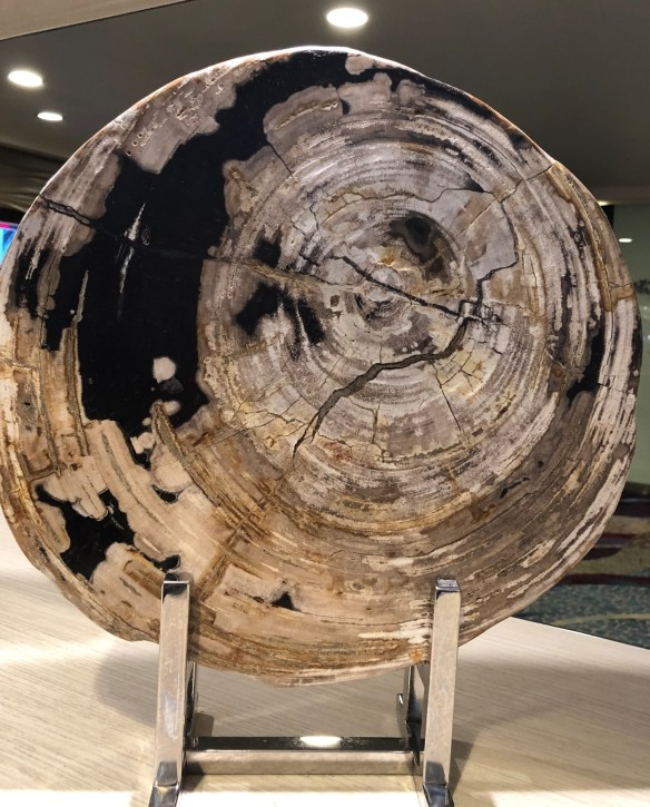 2019 petrified wood