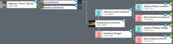 mitochondrial ancestry tree