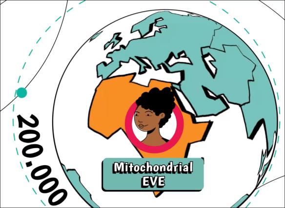 mtDNA journey mitochondrial eve.png