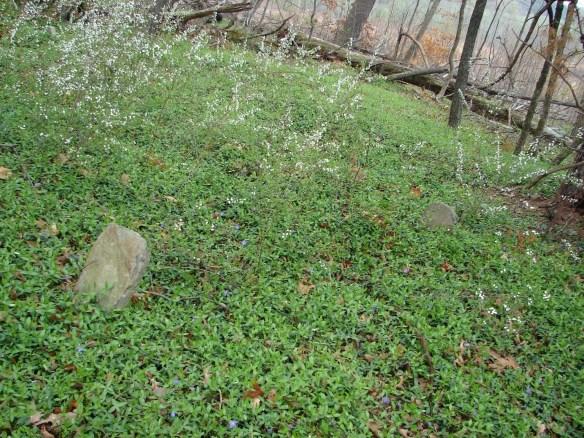 James Moore cemetery 4.jpg