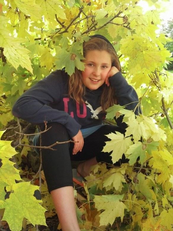 Phoebe tree.jpg