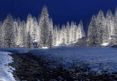 CHRISTMAS TREES Winter Amp Nature Background Wallpapers On