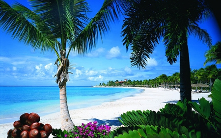 Tropical Bliss Beaches Amp Nature Background Wallpapers On