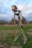 N40 Box: Tom Breaking Into Barn Owl Box