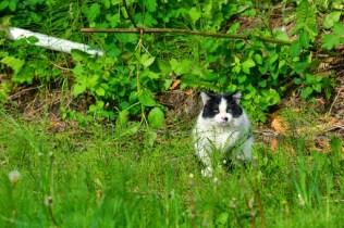cat (GH)