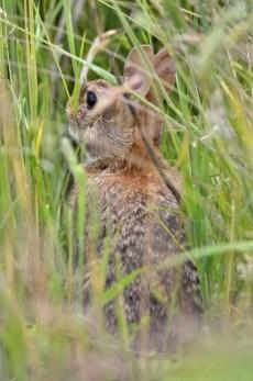 Bunny (GB)