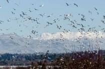 Gulls (JMacD)