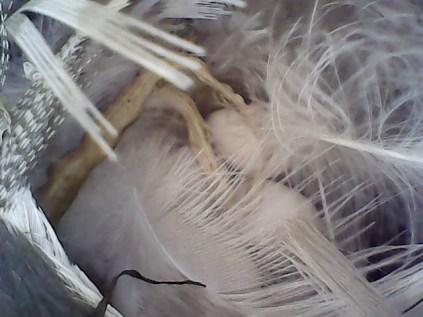 photo using Endoscope (CMcV)