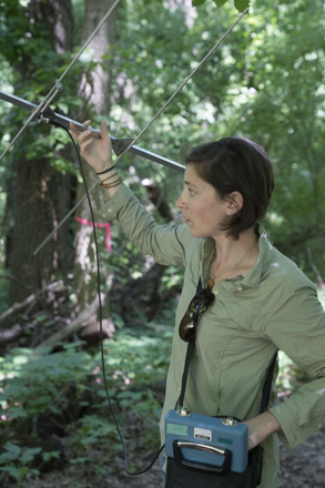 DNR Conservation Biologist Heather Kaarakka radio-tracks a bat to help learn more about the habitat it needs during the summer.