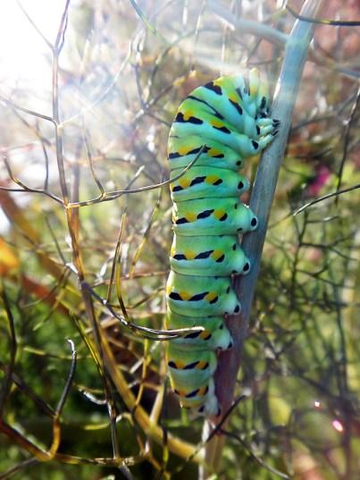 caterpillarcrawl_atkinson