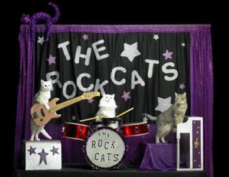 Acrocats_385px