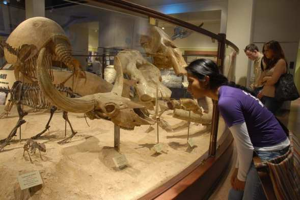 texas-memorial-museum-fossils_094207