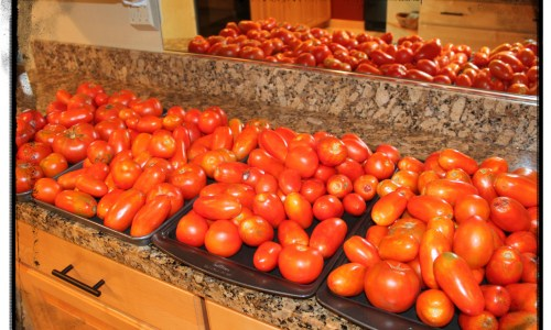 Tomatoes Drying