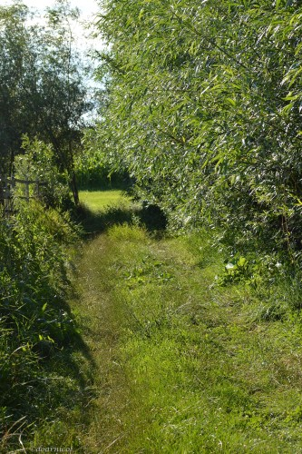 path to sunny meadows