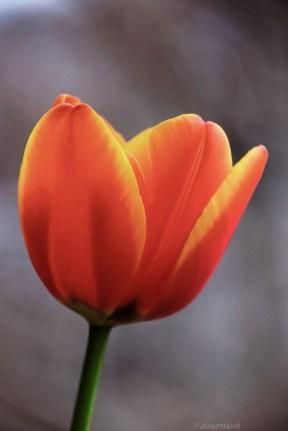 chic petals