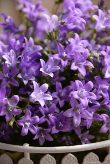 purple togetherness