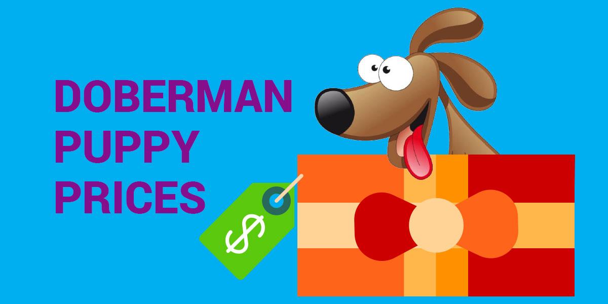 karamia29   Doberman Blog