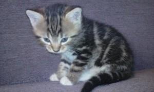 zdjęcie kotka
