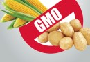 Wkrótce GMO będzie można rozpoznać w każdej kuchni