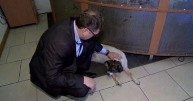 Burmistrz Aleksandrowa zatrudnił bezdomne psy