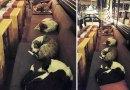 W tej kawiarni pozwalają psom zostać na noc