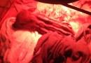 """Włoska rodzina uratowała małego warchlaka, który stał się ich """"zwierzątkiem domowym"""""""