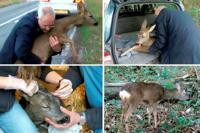 deer-main_2608489a
