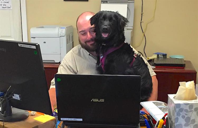 kurgo-dog-office