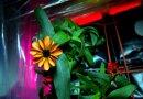 Pierwsze rośliny kwitną na pokładzie międzynarodowej stacji kosmicznej ISS