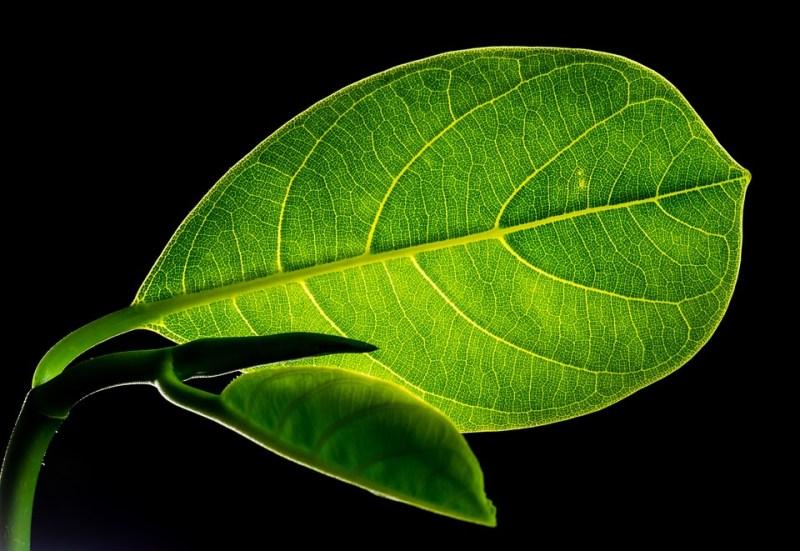 leaf-299931_960_720