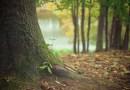 Jeśli na spacer to koniecznie do lasu