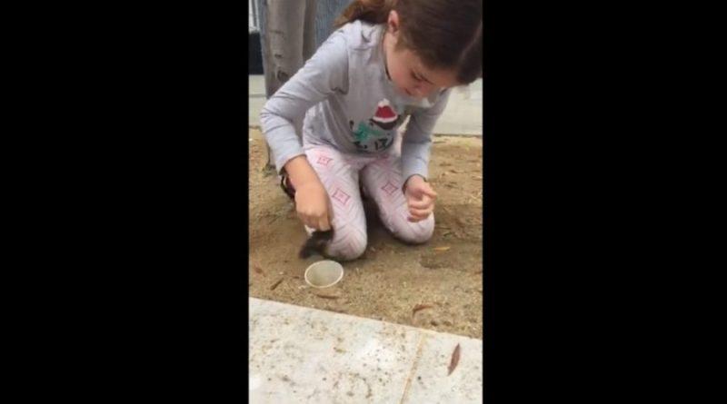 Sześcioletnia dziewczynka użyła swoich drobnych rąk, aby uratować małe kaczuszki