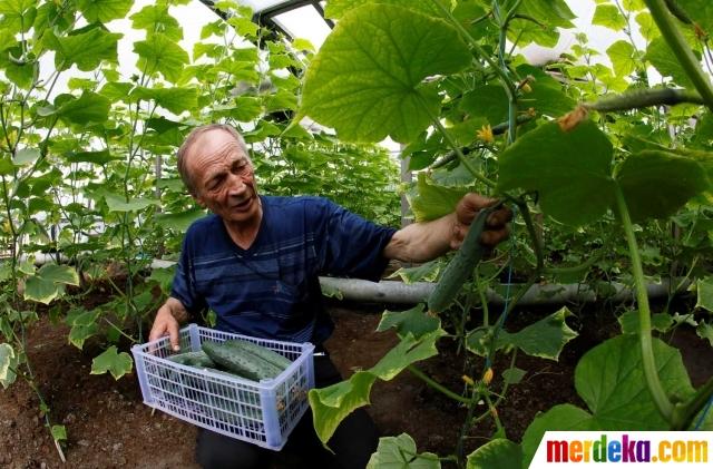 20160523115322-kisah-unik-petani-di-rusia-suburkan-kebunnya-dengan-main-akordeon-005-isn