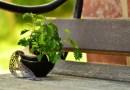 W trakcie badań australijscy naukowcy potwierdzili, że rośliny czują, kiedy są przez nas dotykane