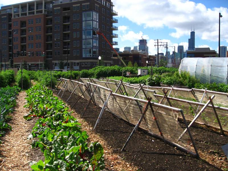 New_crops-Chicago_urban_farm