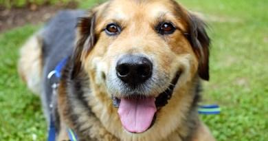 Pies jest mądrzejszy, niż sądziliśmy. Potrafi rozróżniać słowa i intonację ludzkiej mowy