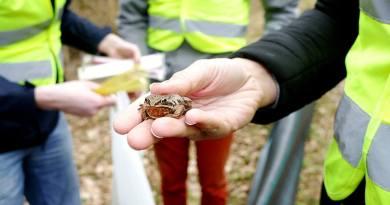 Studenci z Białegostoku ruszyli z pomocą żabom, traszkom i ropuchom