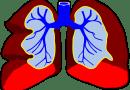 Niezwykłe odkrycie – w płucach jest produkowana krew!
