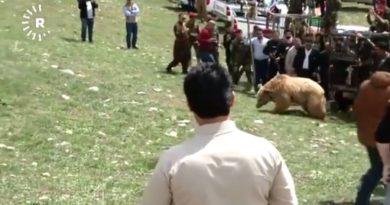 Władze irackiego Kurdystanu zadecydowały o wypuszczeniu na wolność sześciu niedźwiedzi przejętych z rąk prywatnych