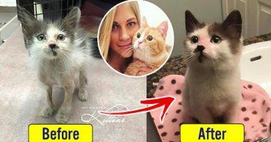 Litwinka uratowała ponad 350 bezdomnych kotów w ciągu dwóch lat!