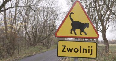 Koty ginęły na drodze. Postawił znak, żeby je ratować