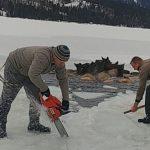 Ratownicy weszli na cienki lód, żeby uratować łosie, które utknęły w lodowatej wodzie
