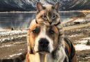 Henry i Baloo – niezwykły duet czworonożnych podróżników