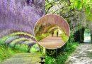 Kwiatowy tunel z Kawachi Wisteria Garden w Japonii…niesamowita feeria barw i kolorów