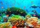Hawaje zakazują używania kremów z filtrem, żeby chronić rafę koralową