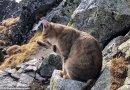 Zaskakujące spotkanie w Tatrach. Na szczycie Rysów turysta natknął się na kota