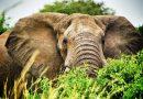 Pierwsze w Wietnamie etyczne wycieczki, w trakcie których można oglądać słonie